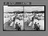 view [Horses.] 12509 Photonegative digital asset number 1