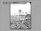 view A tobacco plantation, Pina del Rio, Cuba. Copyright 1899 by Strohmeyer & Wyman. [On negative.] [Cat. No. 20580 : half-stereo photonegative,] digital asset: A tobacco plantation, Pina del Rio, Cuba. Copyright 1899 by Strohmeyer & Wyman. [On negative.] [Cat. No. 20580 : half-stereo photonegative,] 1899.