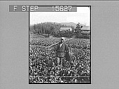 view [Irrigation. Farmer in field : Active no. 22071 : non-stereo photonegative.] digital asset: [Irrigation. Farmer in field : Active no. 22071 : non-stereo photonegative.]