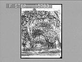 view [Florida scene.] 22436 Photonegative digital asset: [Florida scene.] 22436 Photonegative