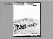 view [Farm scene. Active no. 22947 : half-stereo photonegative.] digital asset number 1