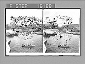 """view """"----- River from the Yumuri Bridge, Cuba. Copyright 1899 by Strohmeyer & Wyman."""" [on negative] 23668 photonegative 1899 digital asset number 1"""