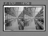 view Warping room, factory of the famous Irish linen, Belfast. 511 interpositive digital asset: Warping room, factory of the famous Irish linen, Belfast. 511 interpositive 1905.