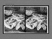 view Chenook Salmon on the floor of a great cannery, Astoria, Columbia River, Oregon. [Active no. 6237 : stereo interpositive.] digital asset: Chenook Salmon on the floor of a great cannery, Astoria, Columbia River, Oregon. [Active no. 6237 : stereo interpositive.]
