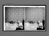 view [Child and cat and home dining table.] 6853 interpositive digital asset: [Child and cat and home dining table.] 6853 interpositive.