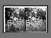 view [African American children with watermelons sitting on a rail fence. Active No. 7206 : stereo interpositive.] digital asset: [African American children with watermelons sitting on a rail fence. Active No. 7206 : stereo interpositive.]
