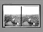 view Detachments advancing by rushes--Japanese crossing a field toward the front, Port Arthur. 7567 Interpositive digital asset: Detachments advancing by rushes--Japanese crossing a field toward the front, Port Arthur. 7567 Interpositive.
