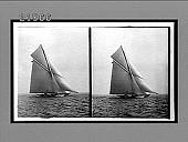 view [Sailboats.] 8071 Interpositive digital asset number 1