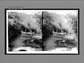 view [Donkeys in Grand Canyon.] 8165 Interpositive digital asset: [Donkeys in Grand Canyon.] 8165 Interpositive