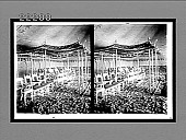 view [Tents.] 8893 Interpositive 1905 digital asset number 1