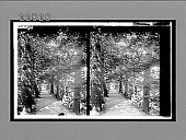 view Addison's Walk, a [famous?] forest aisle in Magdalen College grounds, Oxford. [Active no. 9387 : stereo interpositive,] digital asset: Addison's Walk, a [famous?] forest aisle in Magdalen College grounds, Oxford. [Active no. 9387 : stereo interpositive,] 1905.