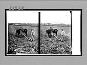 view [Agriculture.] 9784 Interpositive digital asset: [Agriculture.] 9784 Interpositive.
