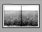 view [Agriculture.] 9946 Interpositive digital asset: [Agriculture.] 9946 Interpositive.