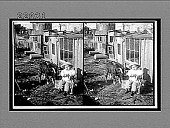 view Billy, Billy and Company. [A small boy, goat, and small dog.] Caption no. 10039 : glass stereoscopic interpositive digital asset: Billy, Billy and Company. [A small boy, goat, and small dog.] Caption no. 10039 : glass stereoscopic interpositive.