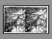 view [Ferns.] 10364 Interpositive digital asset: [Ferns.] 10364 Interpositive.