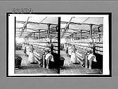 view Inside a cotton mill at Malaga--spooling room and girl employes. 10419 interpositive digital asset: Inside a cotton mill at Malaga--spooling room and girl employes. 10419 interpositive.