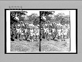 view Ceremony honoring a chief's son who has killed a lion with a spear. 10474 Interpositive digital asset: Ceremony honoring a chief's son who has killed a lion with a spear. 10474 Interpositive