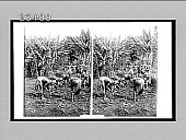 view Maidens of a Kikuyu tribe planting beans--warriors on police duty. [Active no. 10550 : stereo Interpositive.] digital asset: Maidens of a Kikuyu tribe planting beans--warriors on police duty. [Active no. 10550 : stereo Interpositive.]