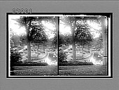 view Mt. Auburn Cemetery, burial-place of Longfellow, Cambridge. 11546 interpositive digital asset: Mt. Auburn Cemetery, burial-place of Longfellow, Cambridge. 11546 interpositive 1900.