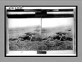 view [Military.] 11959 Interpositive digital asset: [Military.] 11959 Interpositive.