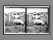 view [Farm scene.] 11969 Interpositive digital asset: [Farm scene.] 11969 Interpositive.