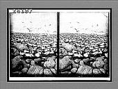 view [Seacoast.] 12009 Interpositive digital asset number 1