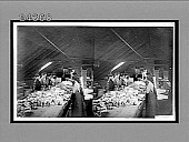 view [Women workers at long tables indoors processing fish products], No. 12196 : Interpositive digital asset: [Women workers at long tables indoors processing fish products], No. 12196 : Interpositive, 1900.