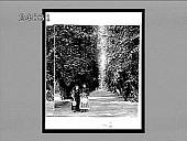 view [Park.] 923 Interpositive digital asset: [Park.] 923 Interpositive 1896.