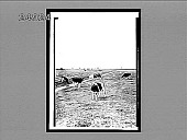 view Miles on miles of peaceful pastures where windmills beckon to each other--(N. of Amsterdam). 1531 Interpositive digital asset: Miles on miles of peaceful pastures where windmills beckon to each other--(N. of Amsterdam). 1531 Interpositive 1905