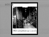 """view """"The groves were God's first temples""""--avenue of noble cryptomerias at Nikko. [Active no. 3881 : non-stereo interpositive.] digital asset: """"The groves were God's first temples""""--avenue of noble cryptomerias at Nikko. [Active no. 3881 : non-stereo interpositive.]"""