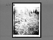 view A winter morning. 5434 interpositive digital asset: A winter morning. 5434 interpositive.