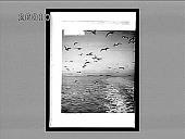 view Paradise of the sea-gulls--San Francisco Bay. [Active no. 5954 : non-stereo interpositive.] digital asset: Paradise of the sea-gulls--San Francisco Bay. [Active no. 5954 : non-stereo interpositive.]