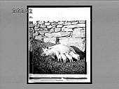 view [Animals.] 6861 Interpositive digital asset: [Animals.] 6861 Interpositive.