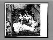 view [Pigs.] 6867 Interpositive digital asset: [Pigs.] 6867 Interpositive.