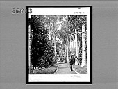 view [Man on cactus- and palm tree-lined lane. Active no. 8880 : Interpositive,] digital asset: [Man on cactus- and palm tree-lined lane. Active no. 8880 : Interpositive,] 1896.