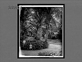 view Ferns and cocoanut palms of a Pacific Paradise, Waikiki, H.Is. 10694 Interpositive digital asset: Ferns and cocoanut palms of a Pacific Paradise, Waikiki, H.Is. 10694 Interpositive.