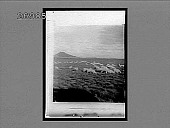 view Sheep grazing on the great veldts of British South Africa. 11126 Interpositive digital asset: Sheep grazing on the great veldts of British South Africa. 11126 Interpositive.