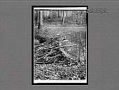view Beaver dam, 40 feet long, built by beavers in beaver pond, Bronx Park, N.Y. City. [Active no. 11474 : interpositive,] digital asset: Beaver dam, 40 feet long, built by beavers in beaver pond, Bronx Park, N.Y. City. [Active no. 11474 : interpositive,] 1913.