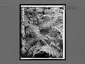 view [Ferns.] 29879 Interpositive digital asset: [Ferns.] 29879 Interpositive.