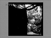 view In the Gardens of the Viscount Cook of Monserrate, the most luxurious in Portugal--near Lisbon. 2335 Photonegative digital asset: In the Gardens of the Viscount Cook of Monserrate, the most luxurious in Portugal--near Lisbon. 2335 Photonegative 1900.
