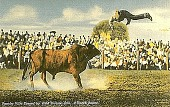 view Pancho Villa Tossed by Wild Brahma Bull, JE Ranch Rodeo [postcard] digital asset: Pancho Villa Tossed by Wild Brahma Bull, JE Ranch Rodeo [postcard].