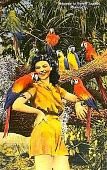 view [Macaws with woman in Parrot Jungle, Miami, Florida. Picture postcard.] digital asset: [Macaws with woman in Parrot Jungle, Miami, Florida. Picture postcard.]