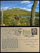 view Tucumcari Mountain [postcard] digital asset: Tucumcari Mountain [postcard].
