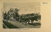 view Una Carreta--a Cuban Ox Cart [picture postcard] digital asset: Una Carreta--a Cuban Ox Cart [picture postcard].