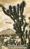 view Piramide de la Luna--San Juan [picture postcard] digital asset: Piramide de la Luna--San Juan [picture postcard].