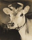 "view [Head of Borden's first ""Elsie the Cow"" at the 1939 New York World's Fair : black and white photoprint] digital asset: [Head of Borden's first ""Elsie the Cow"" at the 1939 New York World's Fair : black and white photoprint], 1939."