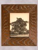 view Framed Photograph of a Chestnut Tree digital asset number 1