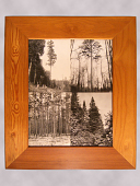 view Framed Photograph of Pine Trees digital asset number 1