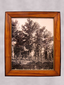 view Framed Photograph of Red Gum Trees digital asset number 1