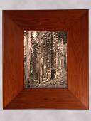 view Framed Photograph of California Redwoods digital asset number 1